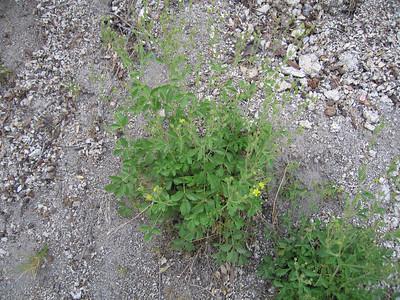 unidentified, Devil's Slide Trail, Fern Valley, CA 24 Jun 2006
