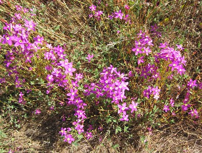 Wildflowers and Plants of the Santa Rosa Plateau and Santa Ana Mountains