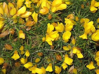 Wildflowers of East Sussex, 24 Apr 2005