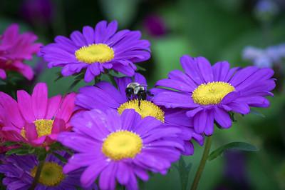 """""""Bee Nice"""""""