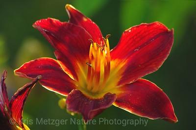 Flowers, Plants, Fungus