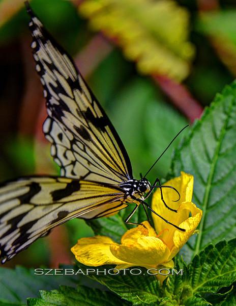 Butterfly 2013