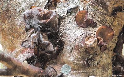 Fungus Redux