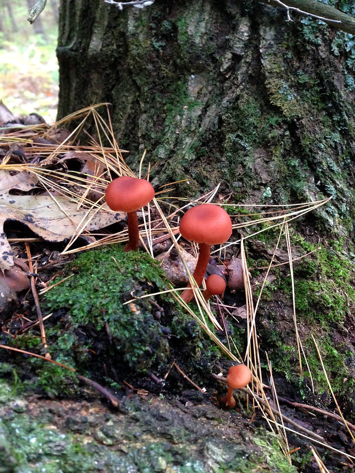 MushroomsUnidentified-Tree