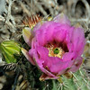 Cati blossom