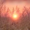 Sun-set In The Grasses