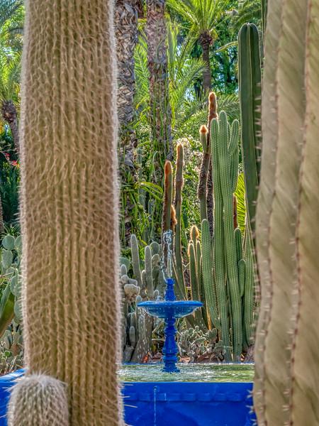 Fountain with cacti, Majorelle Garden