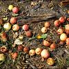 Forgotten Apples