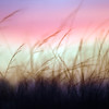 Layers of Grasses