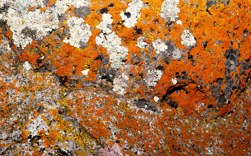 Lichen 2, Dry Falls Visitor Center, Washington, 2000