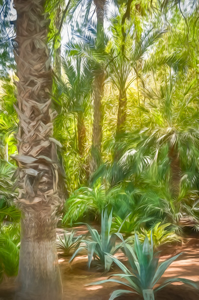 Palm grove at Majorelle Garden (painted photograph)
