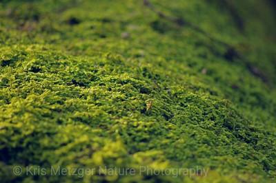 """Fern Moss Ridge"""