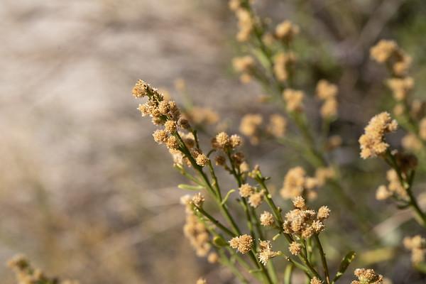 Plants in Joshua Tree National Park
