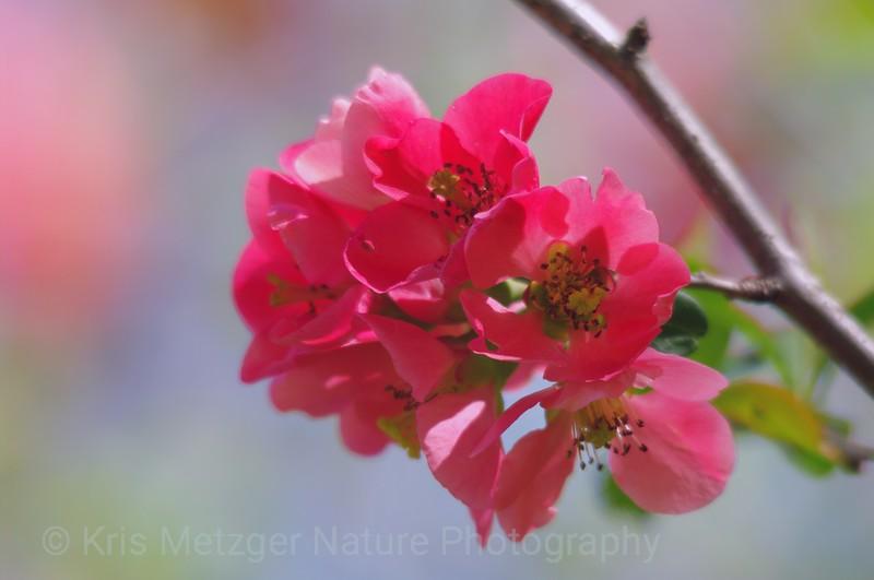 """""""Spring Pastels"""""""
