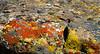 Lichen, Los Banos, California, 1994