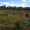 Grassland-CorkscrewSwamp