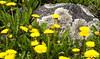 Lichen, Highway 550 North of Silverton, Colorado, 2000