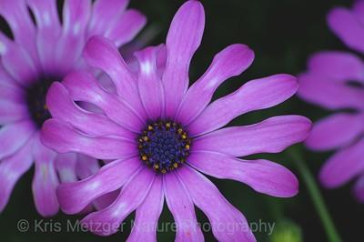 """Purple"""