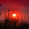Sun-set in the Reeds
