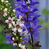 Delicate flowers in an Alaskan garden