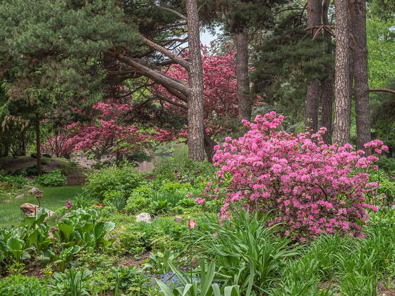 Pretty in pink in Munsinger Gardens