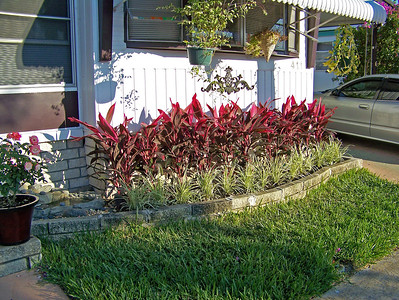 Cordyline andLirope in planter 110307003