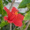 2019-03-24_40X1501 4,300,ISO800 rde hibiscus__3240025