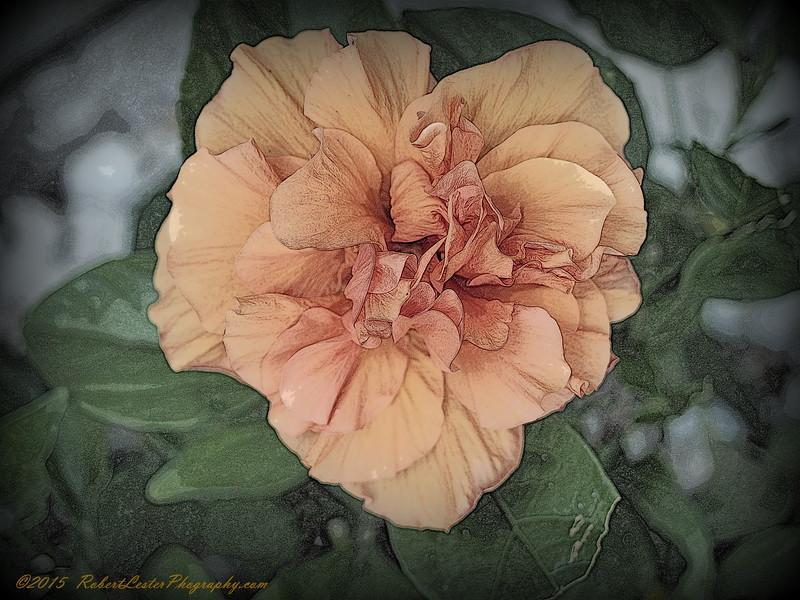2015-10-31_PA310217_Orange Hibiscus,Clearwater,Fl