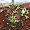 Roses NAMED 110207024