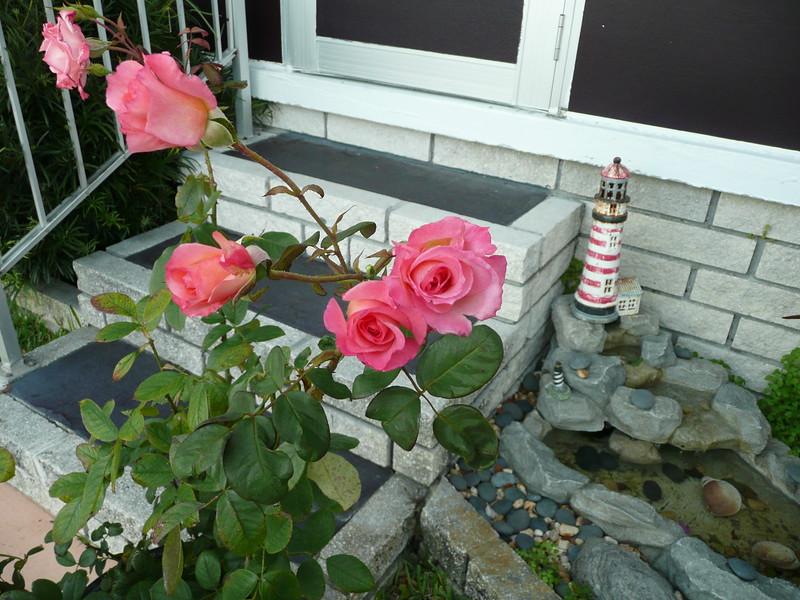 Frt rose TZ3 030908020