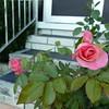 Frt rose TZ3 030908029
