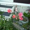 Frt rose TZ3 030908006