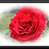 Xti Macro, MF 18x55mm Rose 022209_00003
