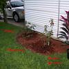 Roses NAMED 110207016