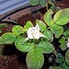 Roses NAMED 110207031
