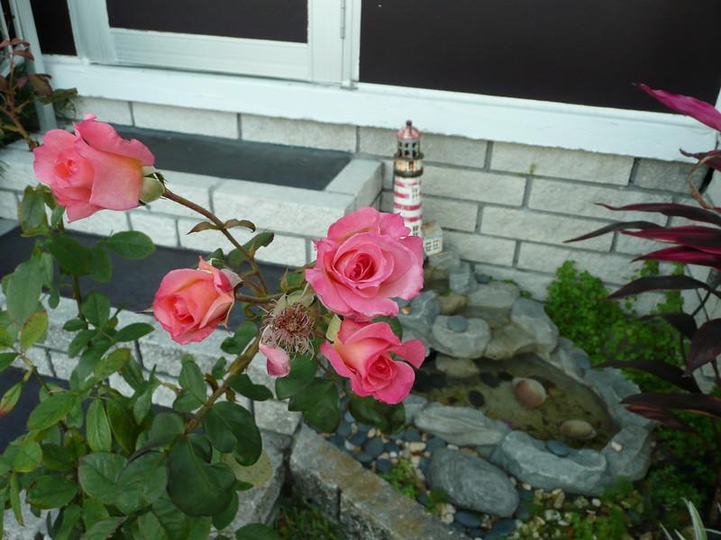 Frt rose TZ3 030908003