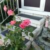 af point on rose then composed 030908007