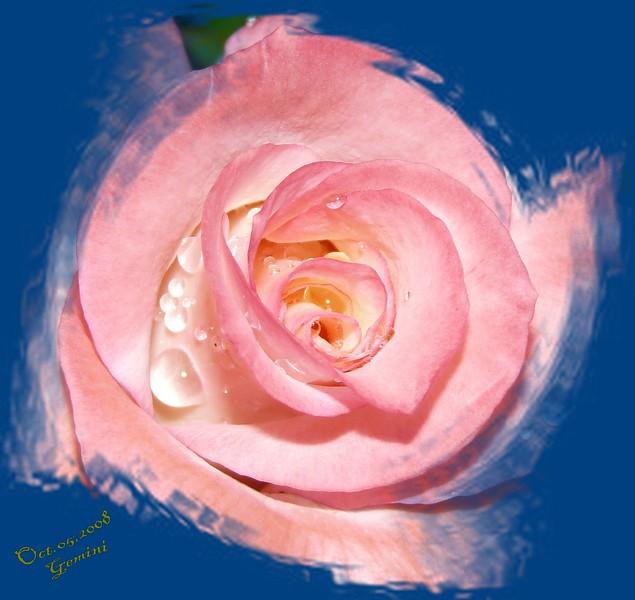 FZ18 IA GEMINI Rose 100508 _00005