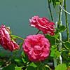 Cir filter rose and sky5-1