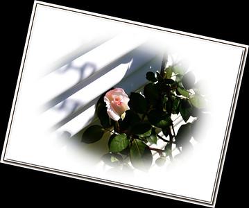 2010-04-04-_1100333fs