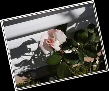2010-04-04-_1100367 sooc fs
