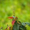 P5240089_red rose