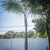 2019-09-10_0845hrs pl512x40ap palm tree's trim_2019-09-10_0845hrs pl512x40ap palm tress trim__9100006