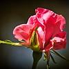 PA150134_carefree beauty
