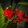 Wild Flower   (am cntr spot)   2018-03-03-3030009