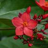 2017-10-13_P1110078_  Wild Flower