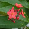 2017-10-13_P1110107_Wild Flower