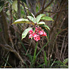 2014-06-09_IMG_1674_Red Flowered Bush_