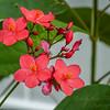 2017-10-13_P1110109_Wild Flower