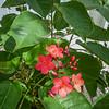 2017-10-13_P1110111_Wild Flower